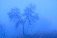 Foggy landscape in the pastures of Bustarviejo, Madrid, Spain.