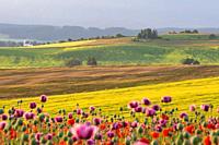 Summer rural landscape of Turiec region, Slovakia.