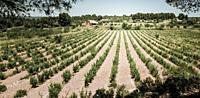 Fields in Matarranya. Teruel province. Spain.