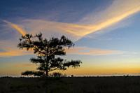 Sunrise at The Everglades National Park. Florida. USA.