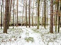 Kozlowiecki Forest, winter, Lublin Voivodeship, Poland.