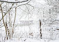 Forest by the Zemborzycki Lake at snowstorm, Lublin Voivodeship, Poland.