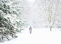 Man nordic walking in the forest by the Zemborzycki Lake at snowstorm, Lublin, Lublin Voivodeship, Poland.