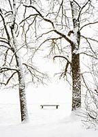 Bench at the Zemborzycki lakefront at snowstorm, Lublin, Lublin Voivodeship, Poland.