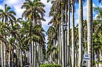 Tall Palm Trees Street Cars Buildings Downtown Palm Beach Florida.