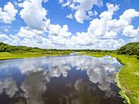 Myakka River on a summer day with blue sky and white clouds in Myakka River State Park in Sarasota Florida USA.