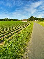 plowed field and country road near Lauzun, Lot-et-Garonne Department, Nouvelle-Aquitaine, France.