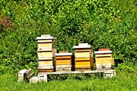 beehives in a meadow in summertime in Germany.