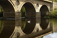 Swan swims from Scotland into England across border on River Tweed at Coldstream, Scottish Borders, Scotland, UK.