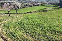Fields in Matarranya. A region of the province of Teruel, Spain.