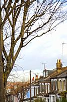 Terraced Houses and Bare Tree.