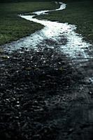Muddy Path.