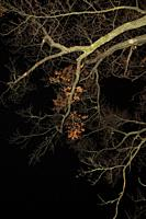 Bare Tree Branches Lit up at Night.