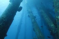 Underwater fauna and flora in the Caribbean sea around Bonaire, Netherland Antilles. Divesite Salt Pier.