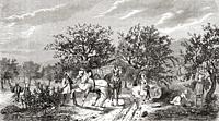 Workers picking apples in Normandy, France in the 19th century. From Le Savant du Foyer ou Notions Scientifiques Sur Les Objets Usuels de la Vie, publ...