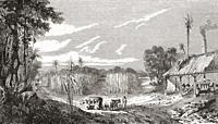 Harvesting sugar cane in the colonies, 19th century. From Le Savant du Foyer ou Notions Scientifiques Sur Les Objets Usuels de la Vie, published 1864.
