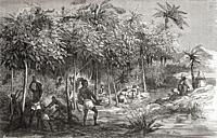 Slaves harvesting cacao from a plantation in Mexico, 19th century. From Le Savant du Foyer ou Notions Scientifiques Sur Les Objets Usuels de la Vie, p...
