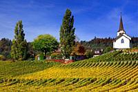 Idyllic countryside landscape, Fechy church in vineyards, Eglise de Fechy , Fechy, La Cote , La Cote Vaudoise, Morges district, canton Vaud, VD, Roman...