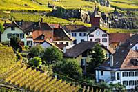 Rivaz village on the shore of Geneva Lake between Lavaux vineyards, Lavaux vineyards on terraces - UNESCO world heritage, Lake Geneva shore, autumn - ...