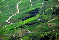 Vineyards on terraces, Rhone Valley, Fendant Wine Region Saviese near Sion, Valais canton , Wallis canton, Switzerland, Europe