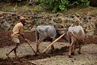 Farmer preparing his land prior to the monsoons arrival