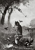 The eagle owl (Bubo bubo) is a species of strigiform bird in the family Strigidae It is a large raptor, distributed throughout Europe, Asia and Africa...
