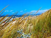 Platamona beach in summer 2021, Gulf of Asinara, Sassari, Sardinia, Italy, Europe.