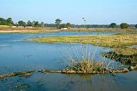 Pond in India. Fish are grown and the water is used for irrigation.