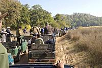 Hysterical car chase, so-called tiger safari, in Bandhavgarh tiger reserve, India.