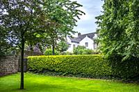 Beautiful green garden with a hedge.