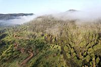 Morning mist in the uplands of the Huelva province. Aerial view. Drone shot. Andalusia, Spain.