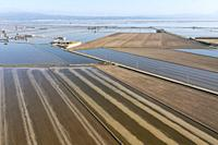 Flooded rice fields in May. The tracks are caused by a tractor sowing rice seeds. The dry patches are experimentally cultivated with dryland rice. Aer...