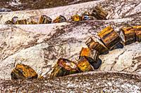Red Orange Yellow Petrified Wood Logs Crystal Forest Petrified Forest National Park Arizona.