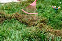 Cleaning cut grass with a fan rake.
