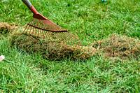 Cleaning the grass with a fan rake after mowing.