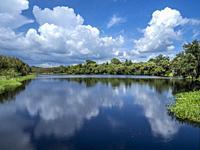 Big white clouda reflecting in the lake in Deer Prarie Creek Preserve in Venice Florida USA.