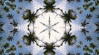 Palm tree in blue sky kaleidoscopic view