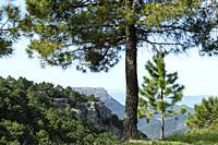 Cerro Cambrón. Sierra de Alcaraz. Albacete, Spain, Europe.
