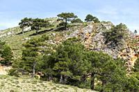 Pico de la Sarga. Sierra de Alcaraz. Albacete, Spain, Europe.