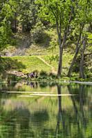 Source of Arroyo Frío. Gossips. Calares del Mundo and La Sima Natural Park. Albacete, Spain, Europe.