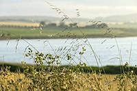 Reserva Natural de la Laguna de Pétrola. Albacete, Spain, Europe.
