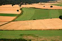 Cultivated fields in Calatañazor. Soria.