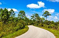Webb Lake Road in Babcock Webb Wildlife Management Area in Punta Gorda Florida USA.