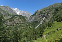 Landscape with the Wannenhorn from the hiking trail between Bellwald and Aspi-Titter suspension bridge, Fieschertal, Valais, Switzerland, Europe.