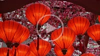 Group of red lantern decoration during celebration Chinese New Year