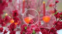 Decoration artificial plum blossom during chinese new year
