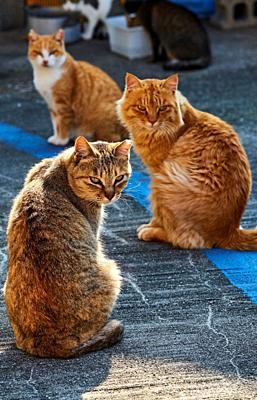 Japan, Shikoku island, Ehime region, Aoshima island, Cat island.