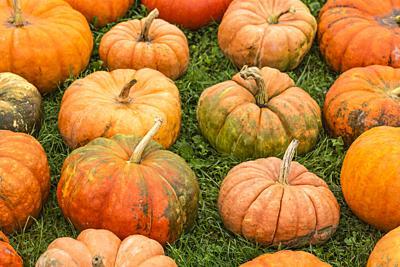 USA, Maine, Wells, autumn pumpkins.