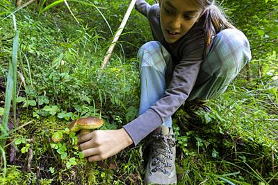 Young girl picking edible mushroom in the woods, Sondrio province, Valtellina, Lombardy, Italy.
