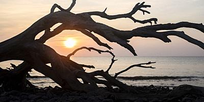 Sunrise on Driftwood Beach - Jekyll Island, Georgia, United States.